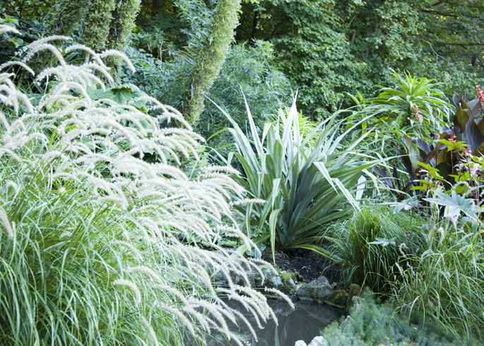 Pennisetum 'Tall Tails' and Astelia chatamica 'Silver Spear'