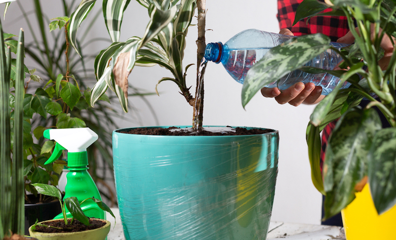 Person watering a houseplant