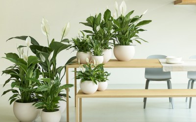 Top tips for healthy houseplants