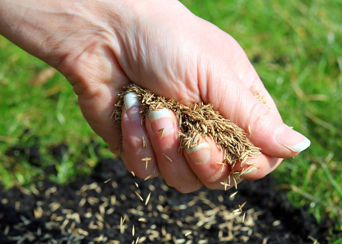 ©Shutterstock - Sowing grass seed