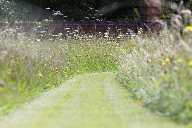 Wildflower meadow with a cut through path