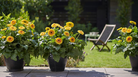 Tops Tips for Styling Your Garden 2020