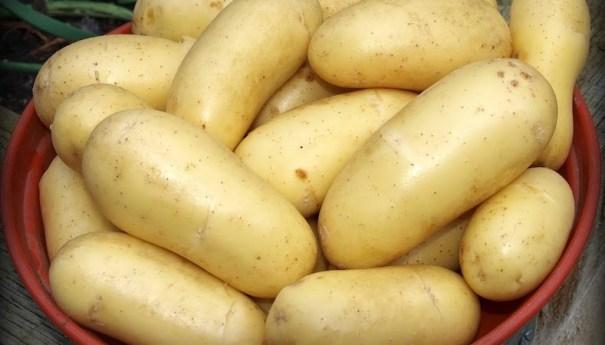 potato-charlotte-red-bowl