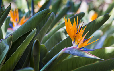 A Taste For The Tropics: Creating A Jungle Garden!