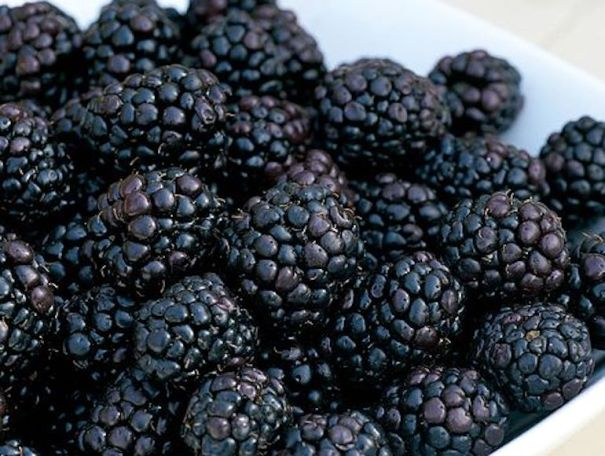 Blackberry 'Reuben' from Thompson & Morgan