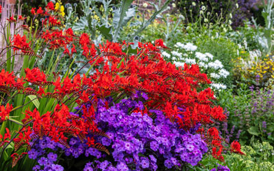 Flowers You Should Avoid Planting Near One Another