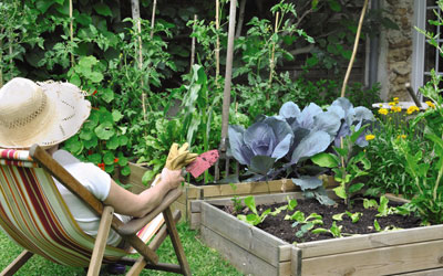 Living Green: Growing Your Own Vegetables