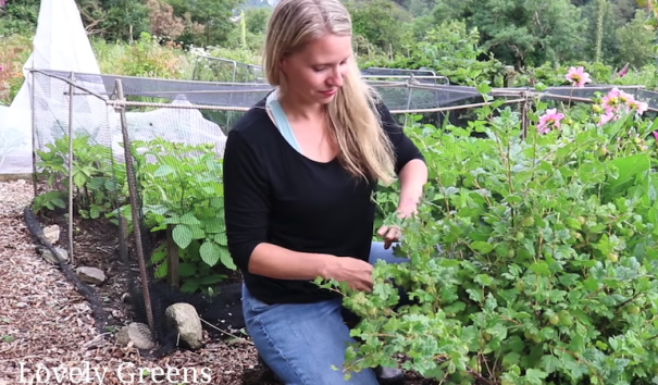 Tanya from Lovely Greens next to berry bush