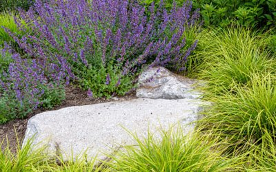 Low-maintenance outdoor plants for busy gardeners