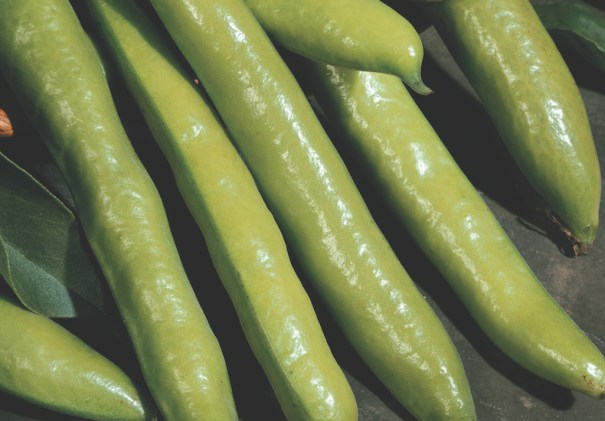 'Aquadulce Claudia' Broad Beans from Thompson & Morgan