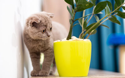 Guide to pet-friendly house plants