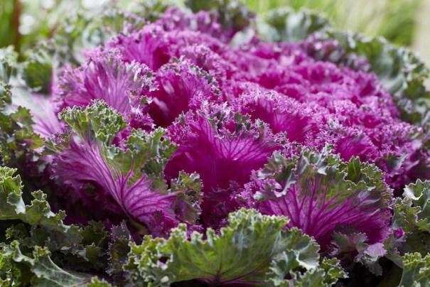 Kale 'Rainbow Candy Crush'