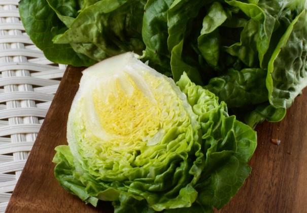 Lettuce Vailan 'Winter Gem' from T&M