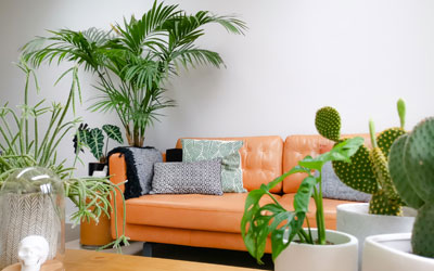 How to Help Houseplants Acclimatise to Your New Home
