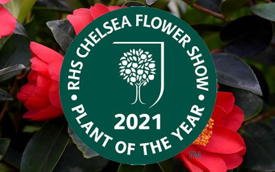 T&M Nominees Shortlisted For RHS Chelsea Flower Show