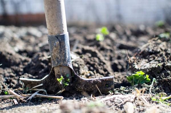 Shovel in soil, digging, weeds, planting in soil