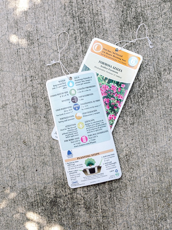 Plant labels for Formosa Azaleas, front and back.