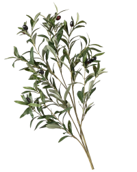Faux olive branches from Those Plant Ladies. Green leaves on a brown stem, used for decorating.