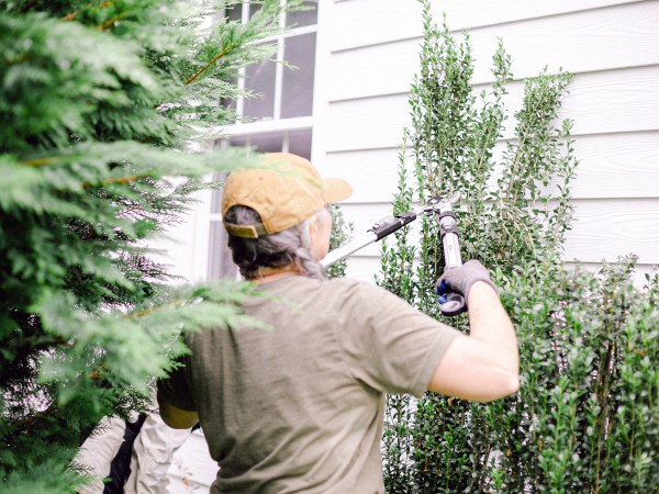 A member of Those Plant Ladies landscape installation crew pruning shrubs.