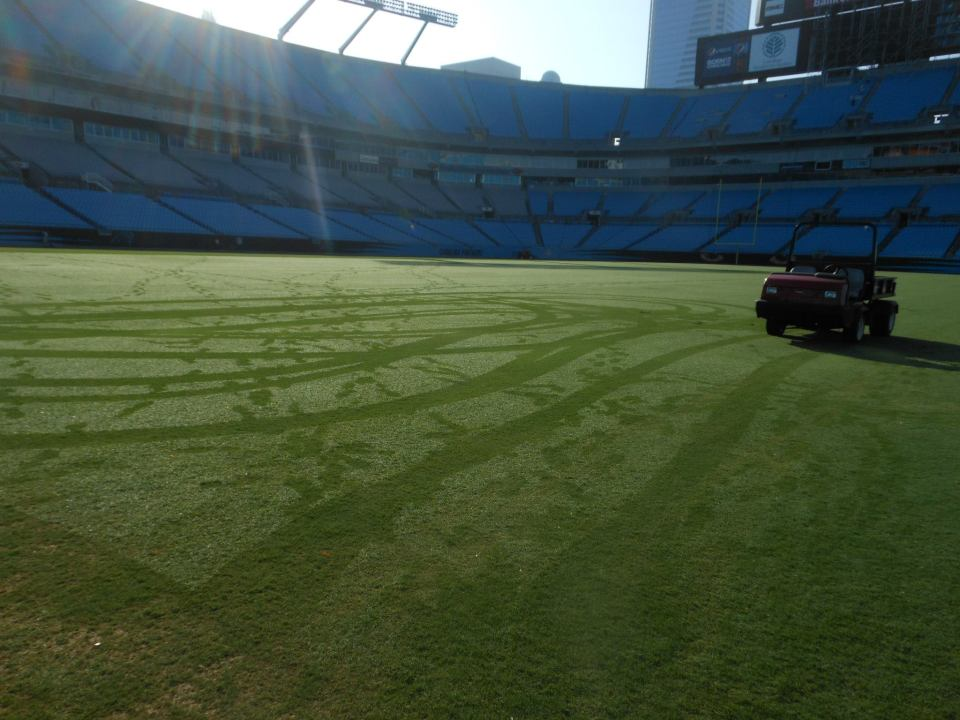 The turfgrass at the Carolina Panthers' Stadium without any lines painted.
