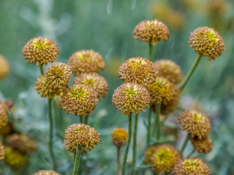 July featured plant on the Those Plant Ladies blog: coneflower.