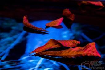 RE-leuchtet_2015_16