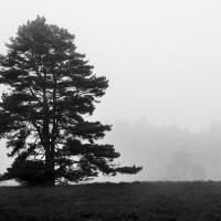 Westruper Heide im Nebel