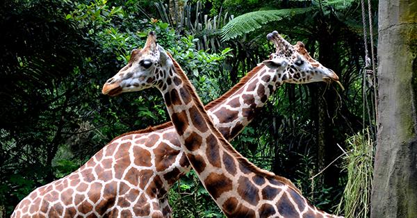 Long Weekend Getaway - Taman Safari Bogor