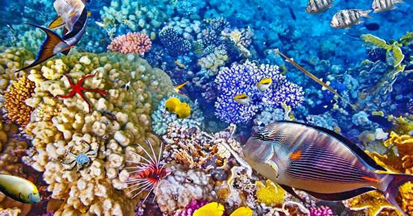 Pemandangan Bawah Laut Indonesia - Bunaken
