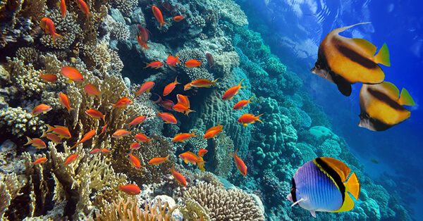 Pemandangan Bawah Laut Indonesia - Taman Laut Takabonerate