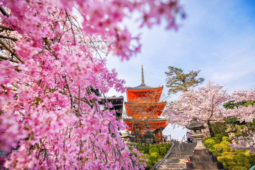 cherry blossom nyc 2020