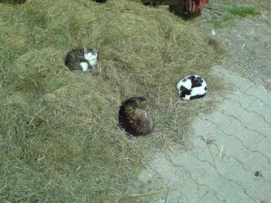 Katzen auf Heuballen