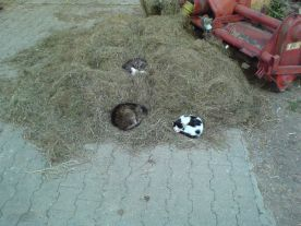 Katzen auf dem Heuberg
