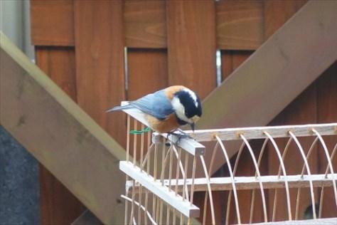 bird003