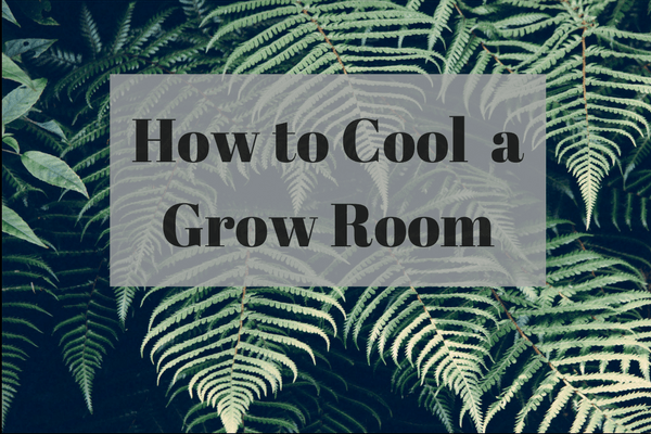 How to cool a grow room