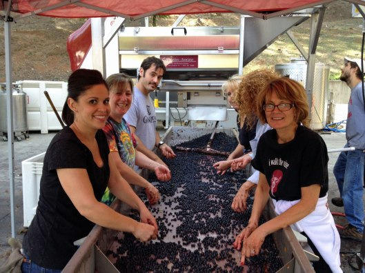 Meticulously sorting grapes