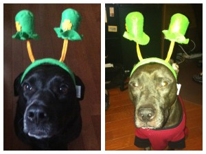 St. Patty's Puppies