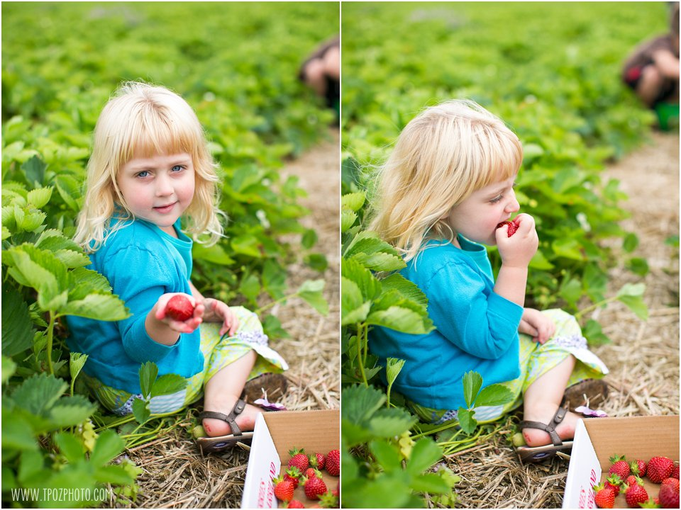 Strawberry-Picking_0004.jpg