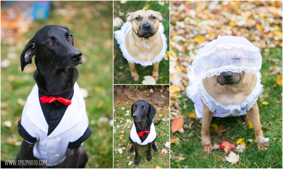Doggies helping with engagement proposal