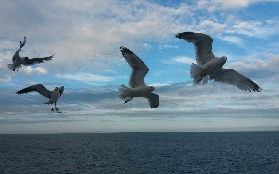Gavines que volen sobre el mar