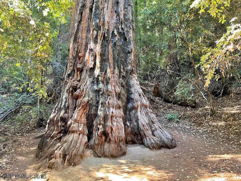 Portola redwood state park 17
