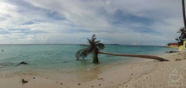 Bahkan pohon kelapa pun ingin berbaring di lembutnya pasir pantai Maafushi
