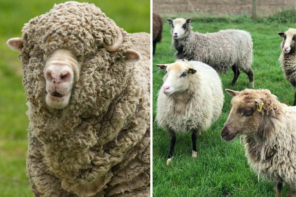 Types of Wool