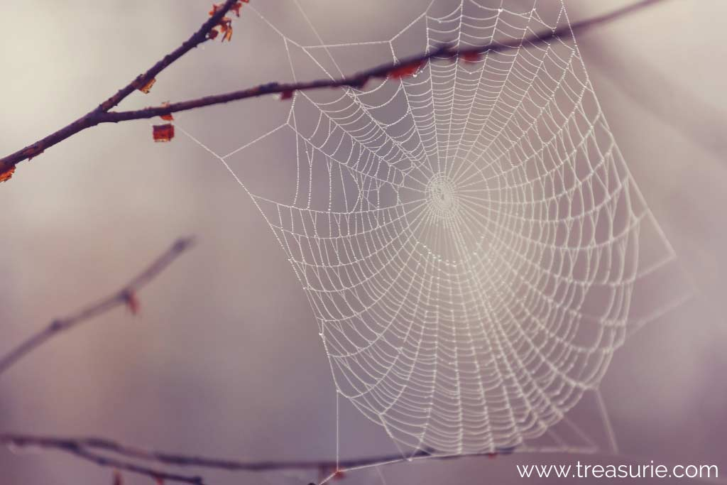 How is Silk Made with Spiders