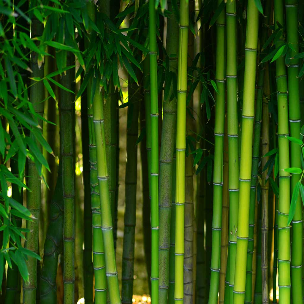 What is Bamboo Fabric