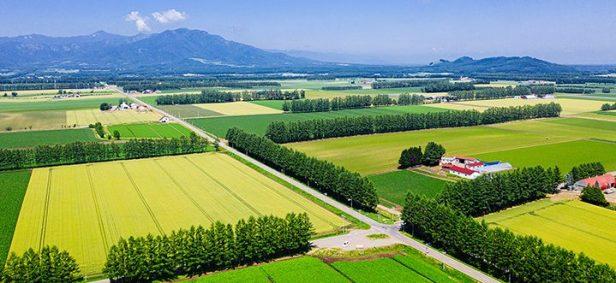 shelterbelt planting surrounding farmland