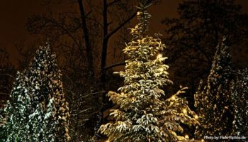 Low Cost Family Tradition Cut Your Own Christmas Tree In  - Visiting The National Christmas Tree