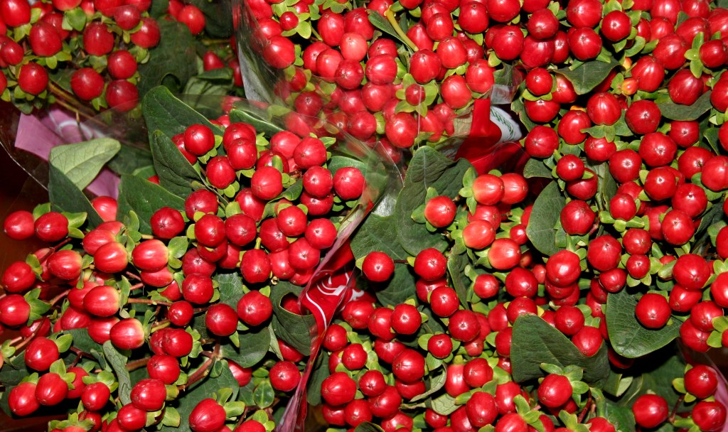 hypericum_berries_edited