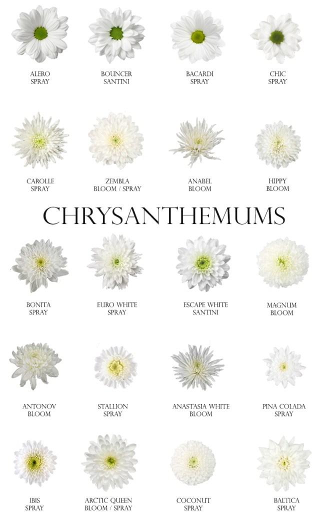 White Chrysanthemums.jpg