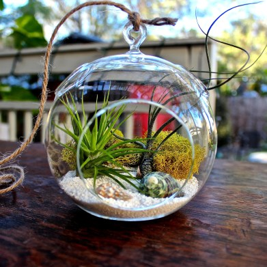 hanging-air-plant-terrarium-kit-ii